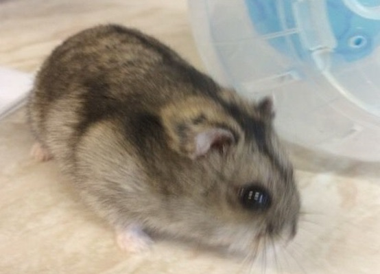 do hamsters bite