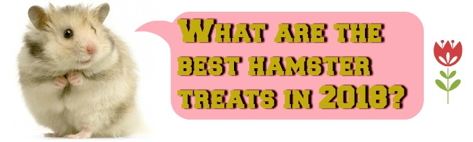 the best hamster treats in 2018
